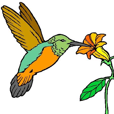 colibri dessin couleurJPG